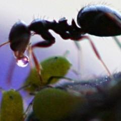 A formiga só trabalha porque não sabe cantar
