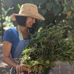 O Poder das Plantas – Edição Manaus
