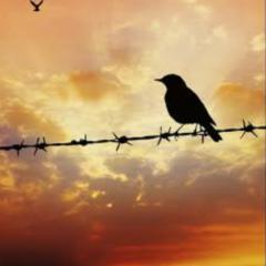 Quando o pássaro se entregou ao homem